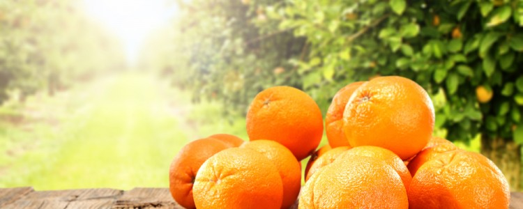Image of oranges with Trees in Background